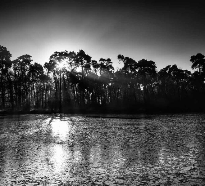 Landscape-Oisterwijkse-Vennen-Holland_JSL7563