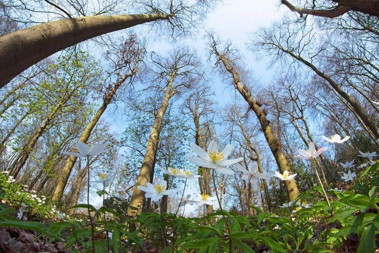 Fotoworkshop Voorjaarsbloeiers en bosanemonen
