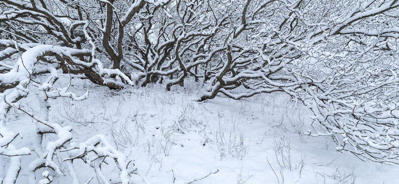 Workshop Winterfotografie