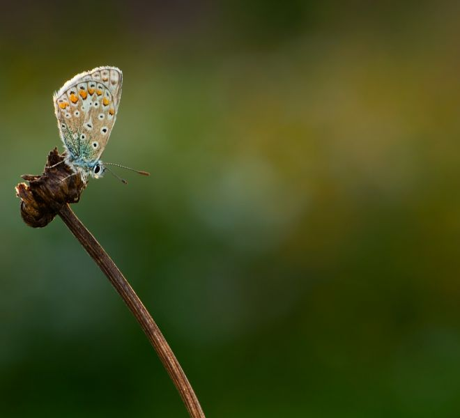 Common-Blue-HM-Serie-3-1