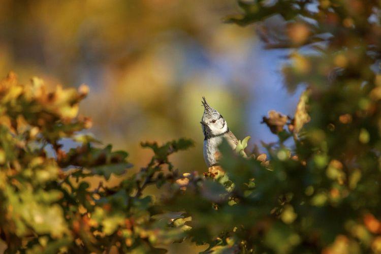 Herfstfotografie-Gaasterland