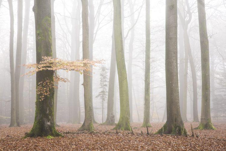 Herfst Friese Wouden