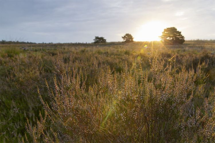 Heide landschapsfotografie