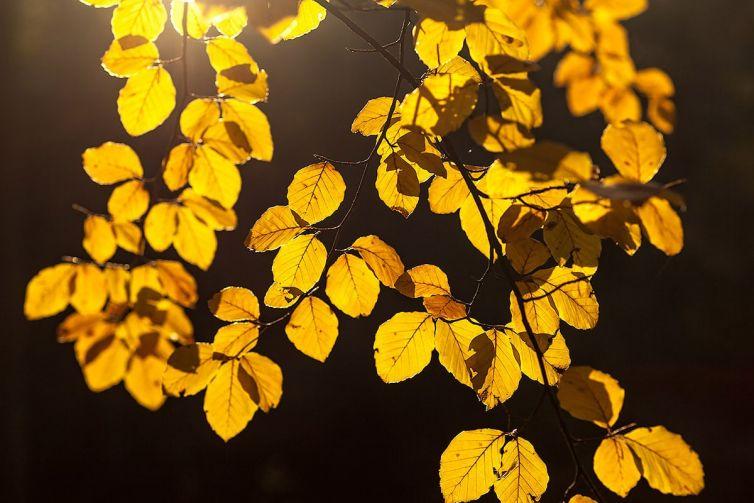 Fotografeer de herfst!