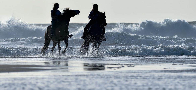 Paarden fotografie op het strand