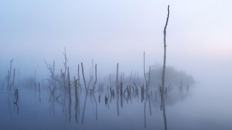 verdronken bosje Alde Feanen